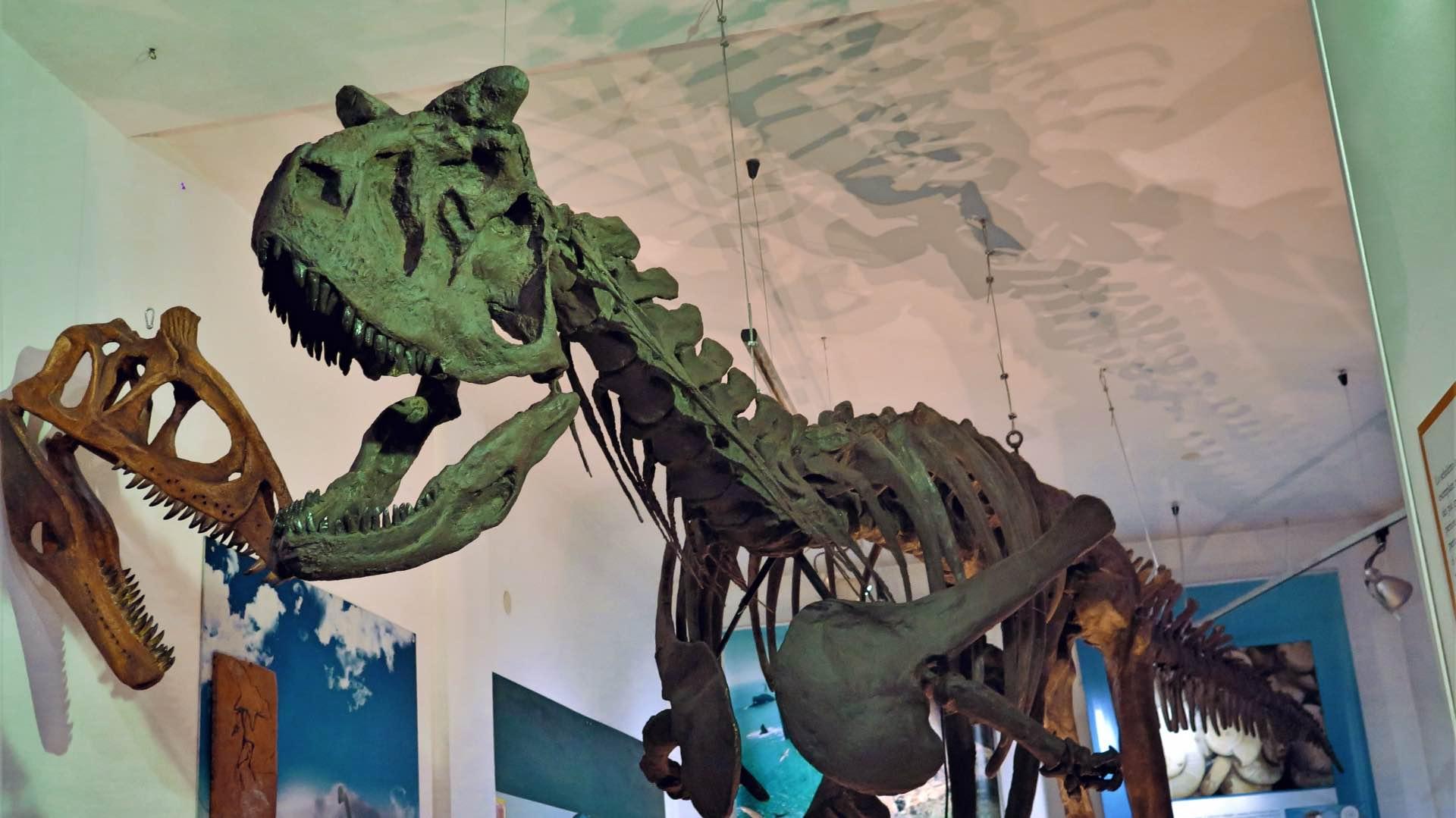 Due modi principali di datare fossili