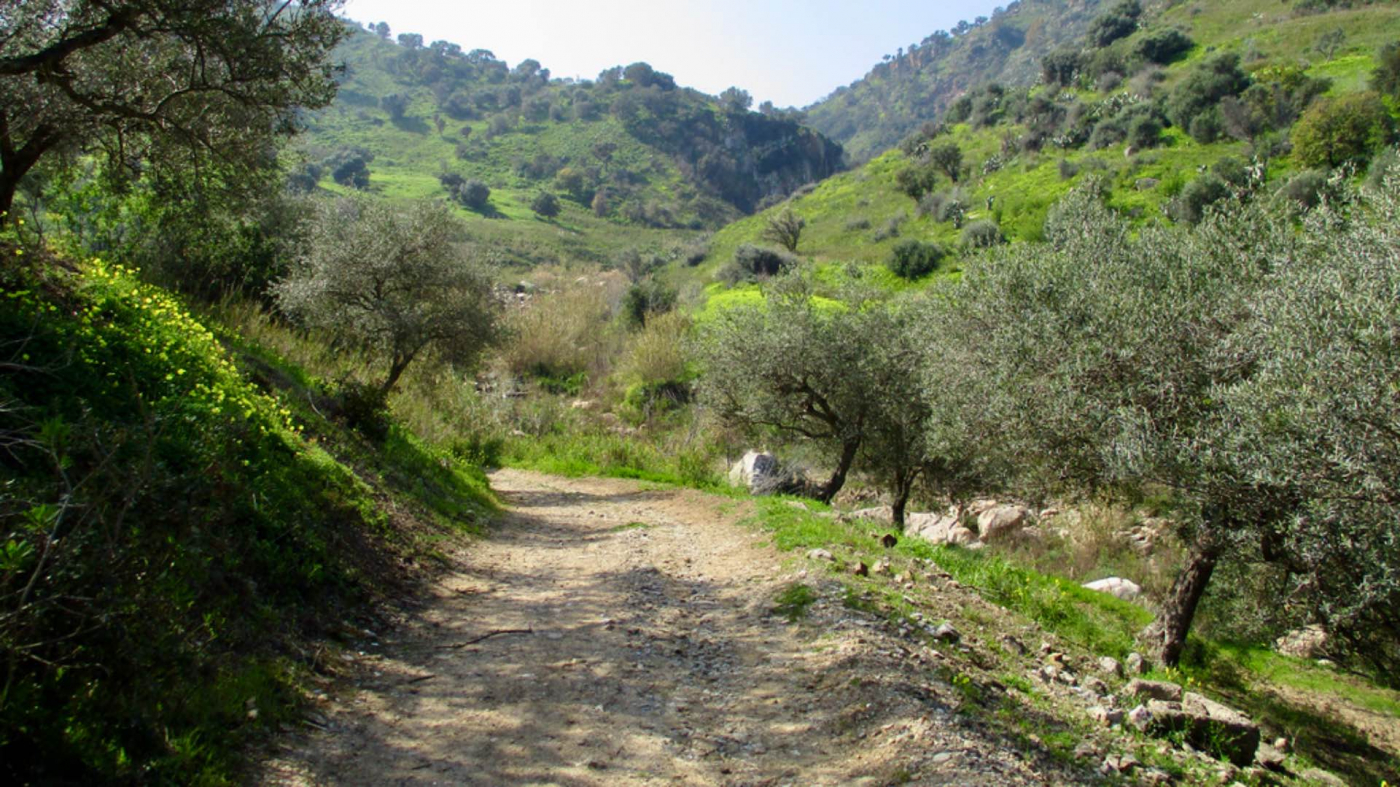 Sentiero che conduce alle cascate